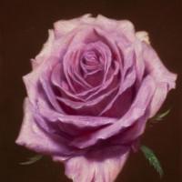 「ピンクの薔薇」0号