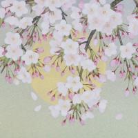 「桜月夜」 6号大